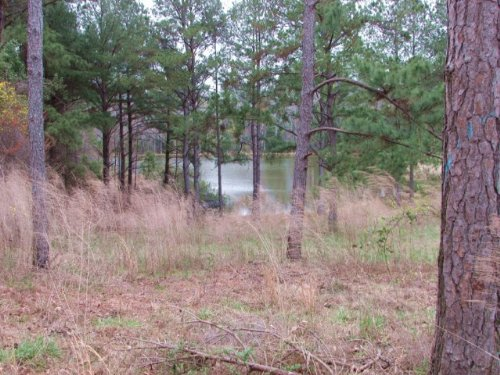Recreational Land With Timberland, : Heidelberg : Jasper County : Mississippi