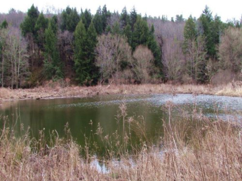 Land Near Oneonta With Pond Stream : Franklin : Delaware County : New York