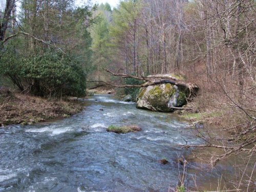 Native Trout Stream Acreage & Cabin : Troutdale : Grayson County : Virginia