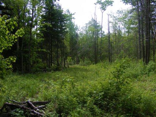 Adirondack Woodlands : Malone : Franklin County : New York