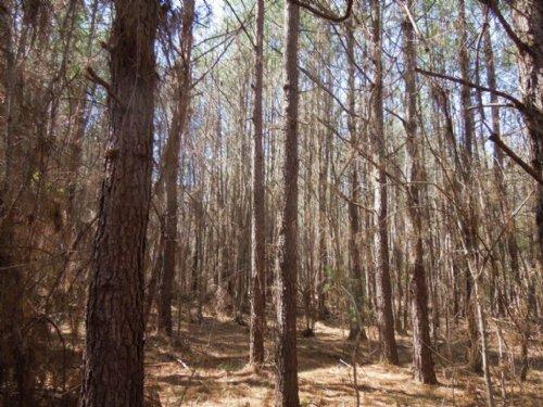 Mcbane Tract : Graham : Alamance County : North Carolina