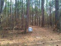 28+/- Wooded Acres On Welcome Road : Newnan : Coweta County : Georgia