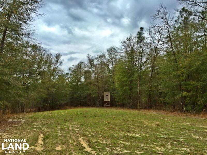 The Malone Road Chunchula Tract : Chunchula : Mobile County : Alabama