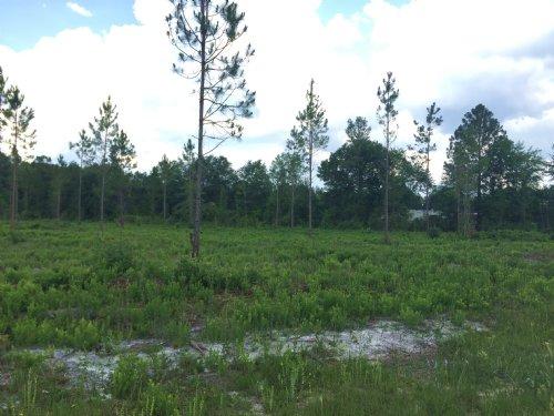 8 Acres, Conner Road : Hilliard : Nassau County : Florida