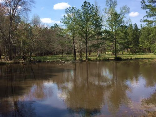 20.443 +/- Acres W/ 2 Small Ponds : Taylorsville : Bartow County : Georgia