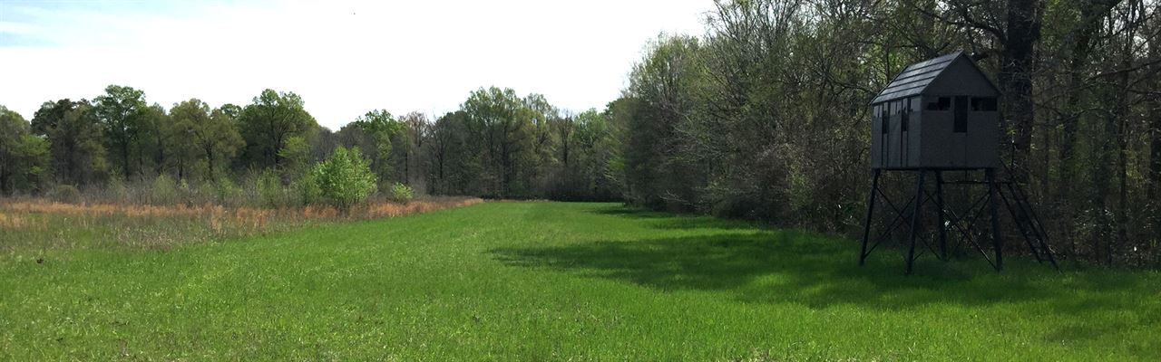 794.00 Acres Hunting Land, Timber