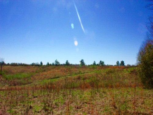 Land For Sale Jones County Ms : Ovett : Jones County : Mississippi