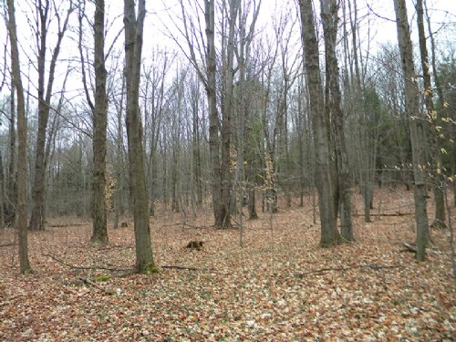 10 Wooded Acres Near State Forest : Richford : Tioga County : New York