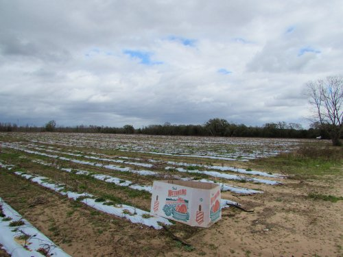 377.58± Acres Of Farmland : Marianna : Jackson County : Florida