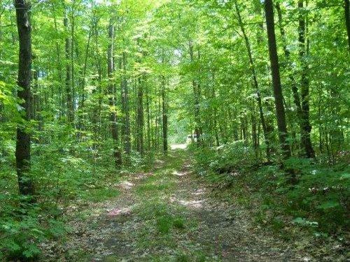 Land O' Lakes - 39.92 Acres : Land O Lakes : Vilas County : Wisconsin