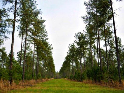 Walnut Woods : Waynesboro : Burke County : Georgia