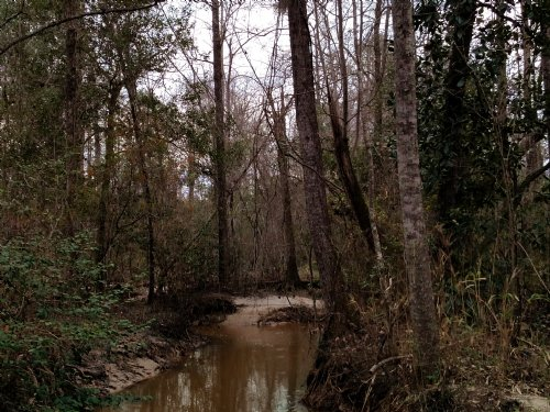 30 Acres With Large Creek : Weston : Webster County : Georgia