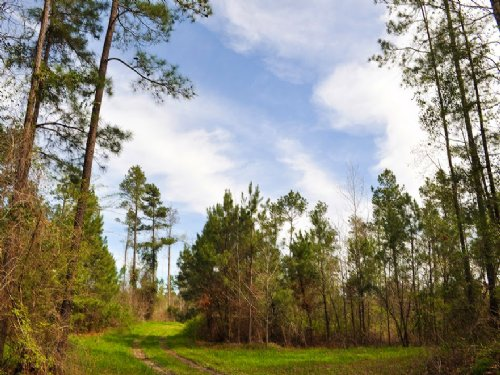 123 Acres W Carlton Loop Rd. : Groveton : Trinity County : Texas