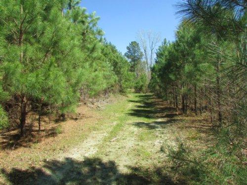 Brunson Tract : Sumter : South Carolina