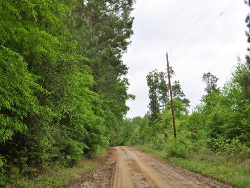 97 Acres Cr 364 : Zavalla : Angelina County : Texas