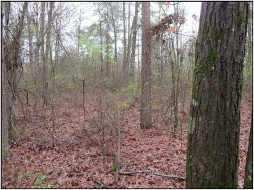29 Acres In Scott County In Morton : Morton : Scott County : Mississippi