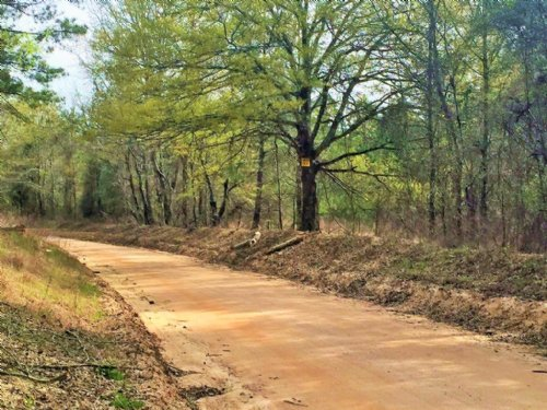 Southern Pines Tract : Sparta : Hancock County : Georgia