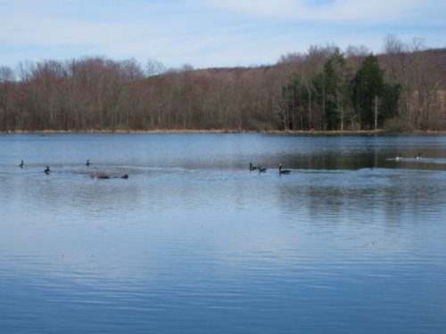 Waterfront Land Finger Lakes 41 Ac : Tyrone : Schuyler County : New York