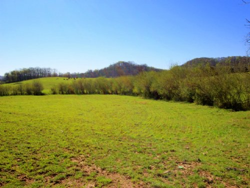 56 Acres Of Gently Rolling Farmland : Hampshire : Maury County : Tennessee
