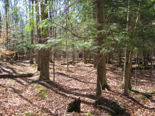14 Acres Bordering State Forest : Sempronius : Cayuga County : New York
