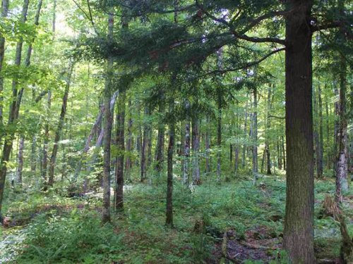 Parcel 2 Forest Dr., 1101725 : Skanee : Baraga County : Michigan
