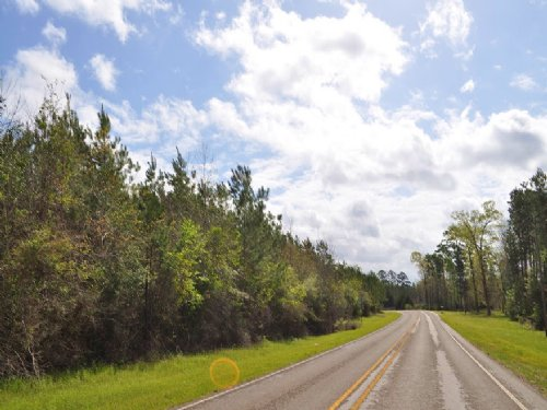 145 Acres Fm 256 : Colmesneil : Tyler County : Texas