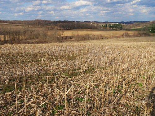 Copeland Woods - 20 Acres : Dresden : Muskingum County : Ohio