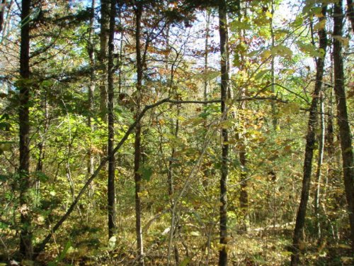 A Hunter's Paradise : Farmville : Prince Edward County : Virginia