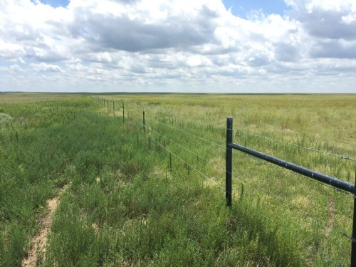 High Plains Ranch Pasture : Ramah : Elbert County : Colorado