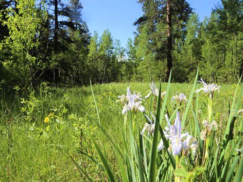 Blue Spruce Canyon : Allenspark : Larimer County : Colorado