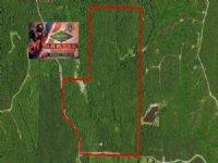 383 Ac - Timberland & Hunting T : Calhoun City : Calhoun County : Mississippi