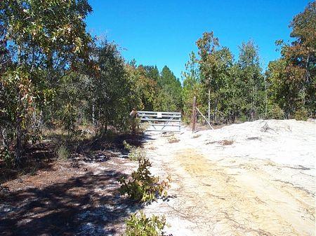 Beautiful 134 Acre Hunting Tract : Swainsboro : Emanuel County : Georgia