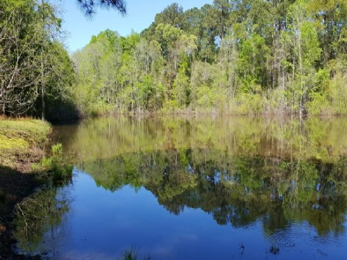 Beautiful Mature Timber With Pond : Fort Valley : Peach County : Georgia