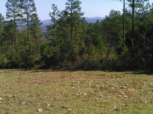 C P Tract 1553 : Piedmont : Calhoun County : Alabama