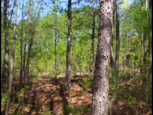 8 Acres In Lauderdale County : Meridian : Lauderdale County : Mississippi