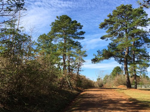 44 Acres Cr 1316 : Rusk : Cherokee County : Texas