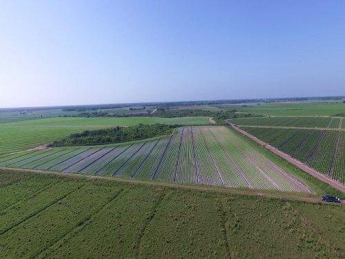 1808± Ac Farmland / Investment Land : Myakka City : Manatee County : Florida