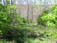 Jersey County Bluffs Farm : Fieldon : Jersey County : Illinois