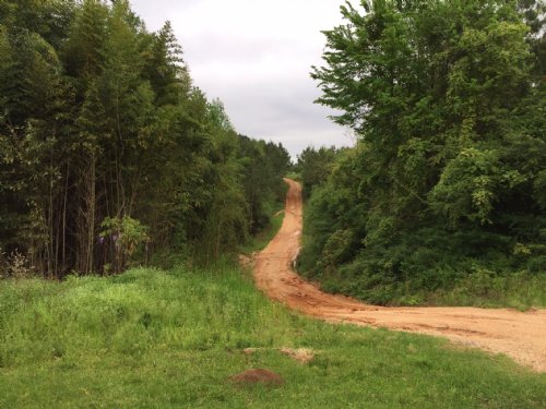 42 Ac Hunting / Timber Tract : Bay Springs : Jasper County : Mississippi