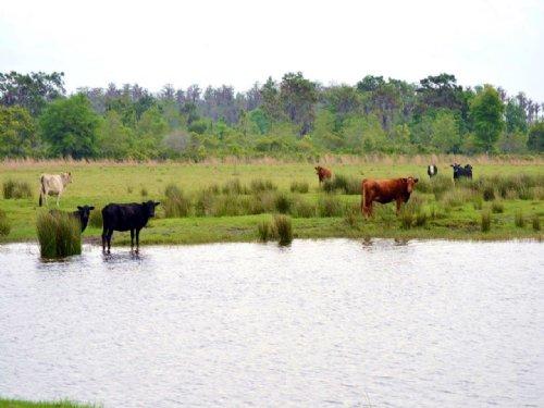 Fish Branch Road Ranch : Zolfo Springs : Hardee County : Florida