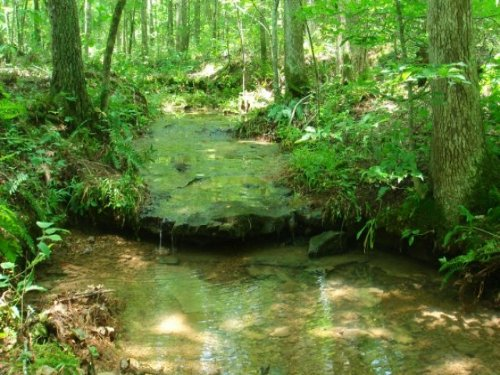 6.2 Ac Sugartree Falls Terms $285/m : Collinwood : Wayne County : Tennessee