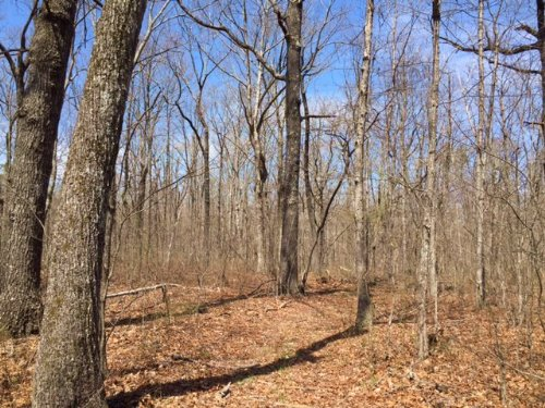 65+/- Acres Prime Hunting Property : Dunlap : Marion County : Tennessee