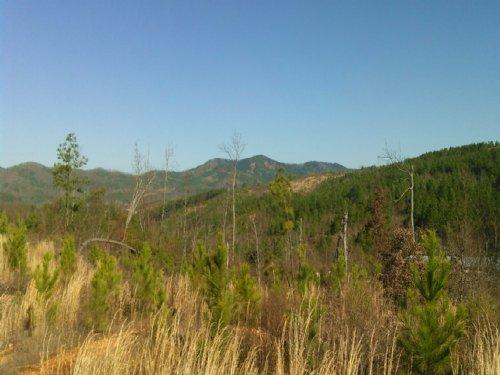 C P Tract 1577 : Centre : Cherokee County : Alabama