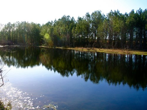 Swain Ag Farm : Perry : Taylor County : Florida