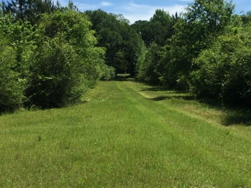 Land With Creek Homesite Pearl Rive : Poplarville : Pearl River County : Mississippi