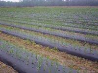 Vegetable Farm For Sale : Gainesville : Alachua County : Florida