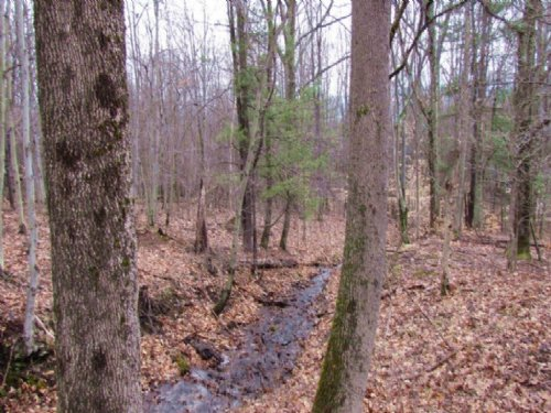 28 Acres Woods Private Hunting : Laurens : Otsego County : New York