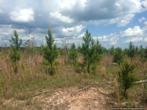 336 Acres Of Great Timber : Quitman : Clarke County : Mississippi