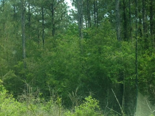 940 Acres Of Commercial Property : Leakesville : Greene County : Mississippi