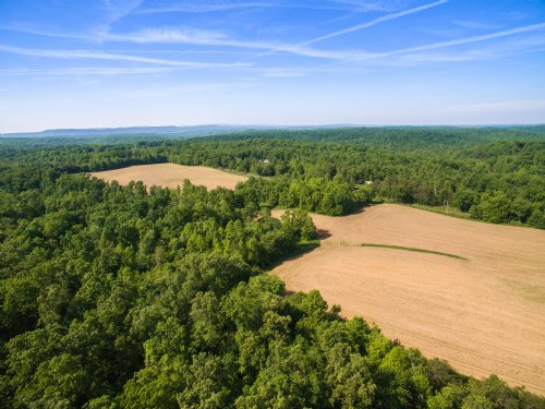 540 Acres On The Cumberland Plateau : Lancing : Morgan County : Tennessee